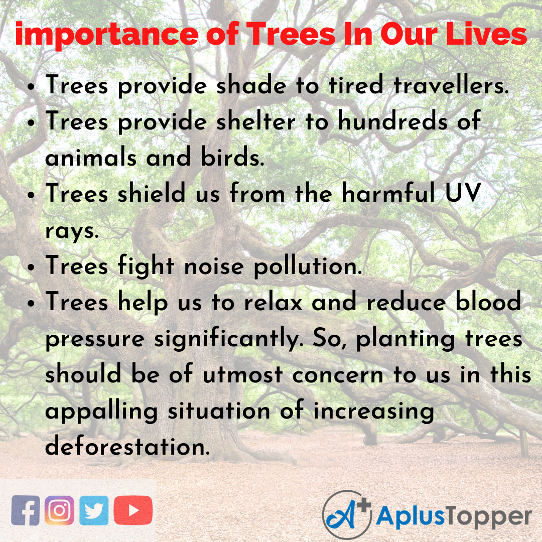 Importance Of Trees In Our Lives Essay