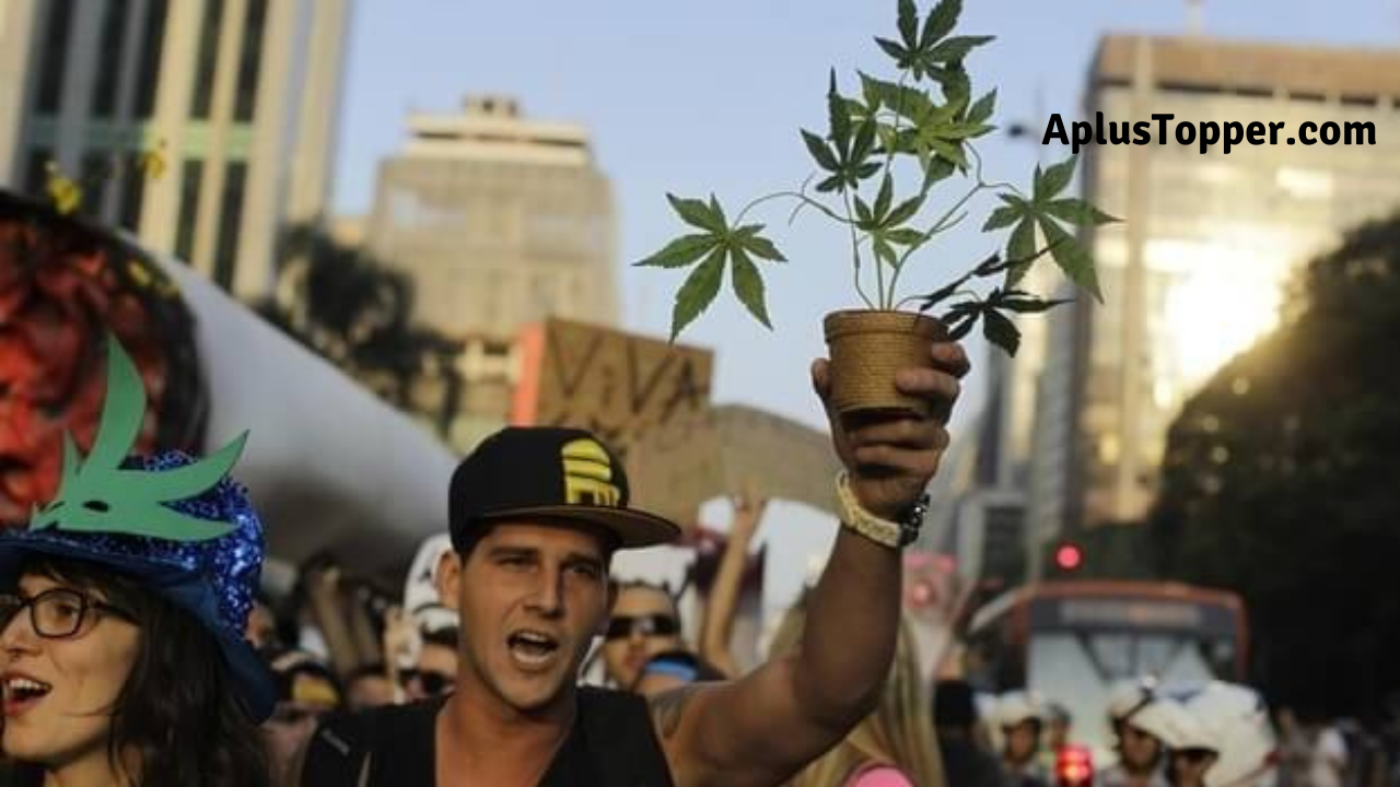 Marijuana Argumentative