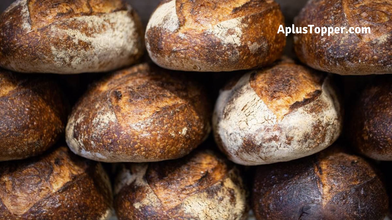 A Loaf Of Bread by James Alan McPherson Essay