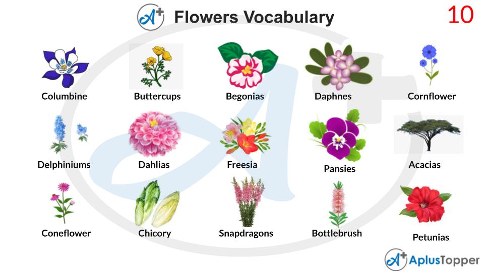 Flower Vocabulary