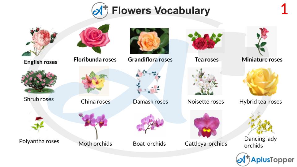 Flowers Vocabulary