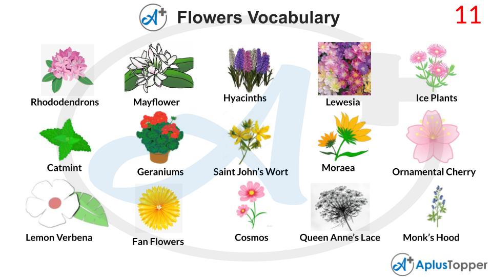 Flowers Vocabulary 11
