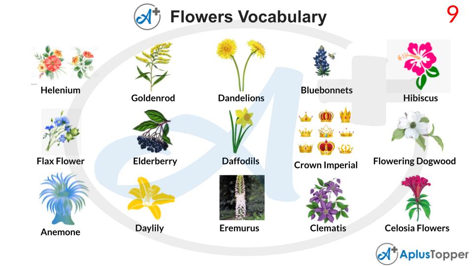 Flowers Vocabulary List of Words