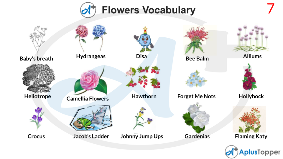 Flowers Vocabulary Meaning