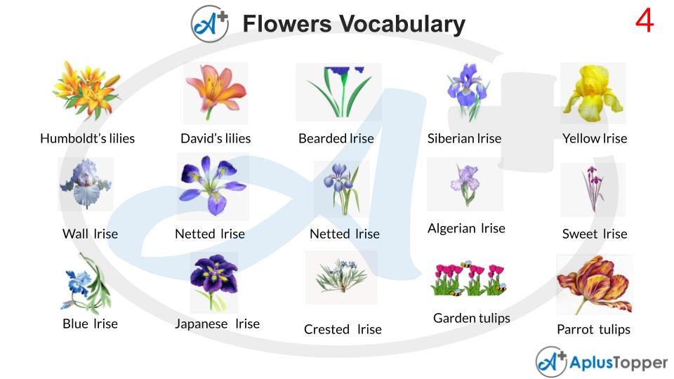 Flowers Vocabulary Words List